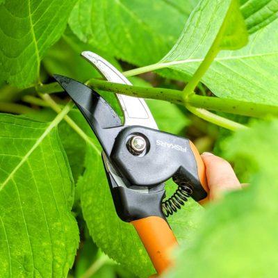 cut stem of hydrangea