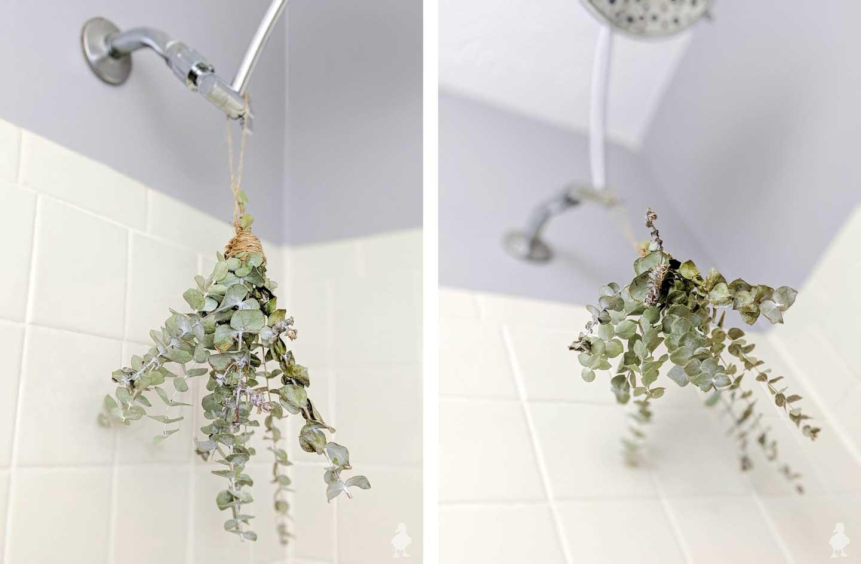 eucalyptus bath bouquet in guest bathroom shower