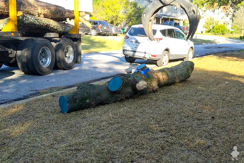 moving magnolia log to my yard