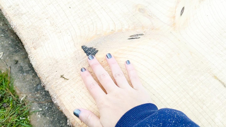 detail of magnolia wood slice